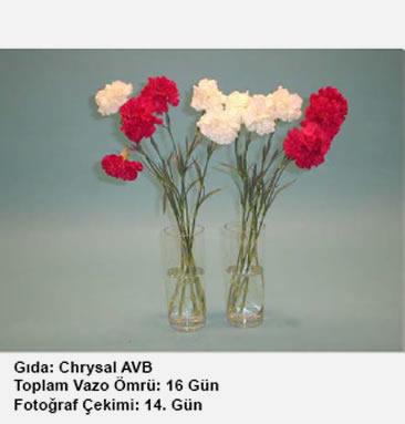 Chrysal AVB